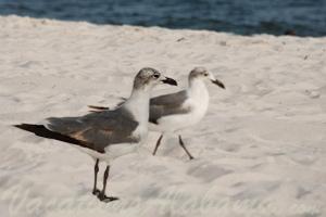 Audubon Bird Sanctuary- Dauphin Island