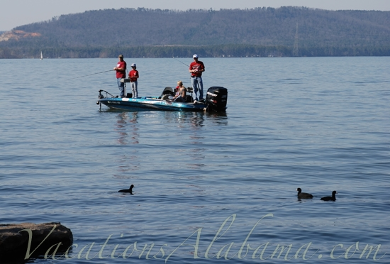 Lake guntersville northeast alabama for Fishing lake guntersville