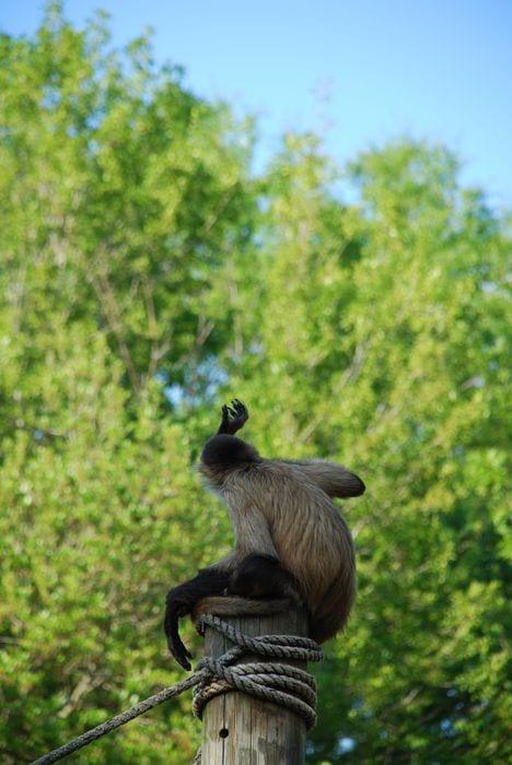 Montgomery Z00, Montgomery, Alabama- monkey