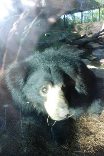 Montgomery Z00, Montgomery, Alabama-Parakeet Sloth Bear