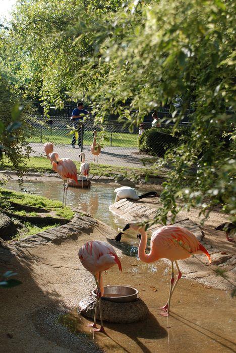 Montgomery Z00, Montgomery, Alabama-flamingos enjoying the Alabama sunshine