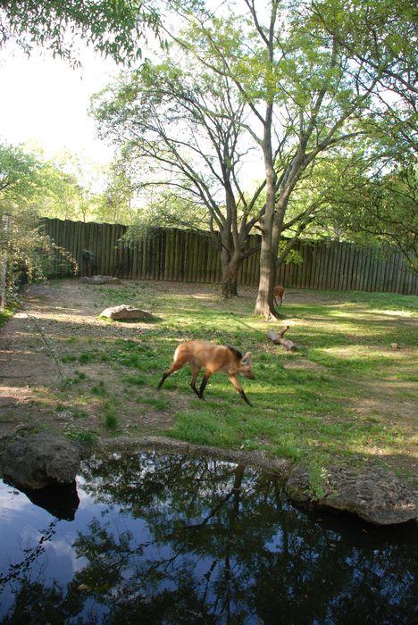 Montgomery Z00, Montgomery, Alabama- wolves walking
