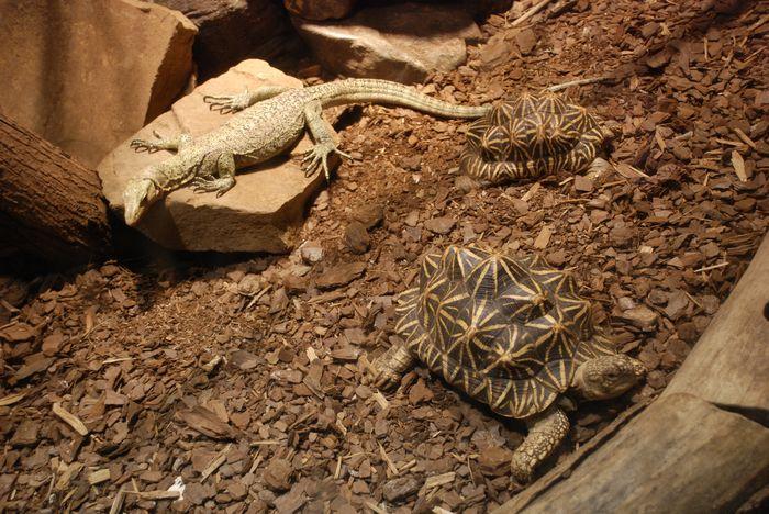 Montgomery Z00, Montgomery, Alabama- turtle & lizard