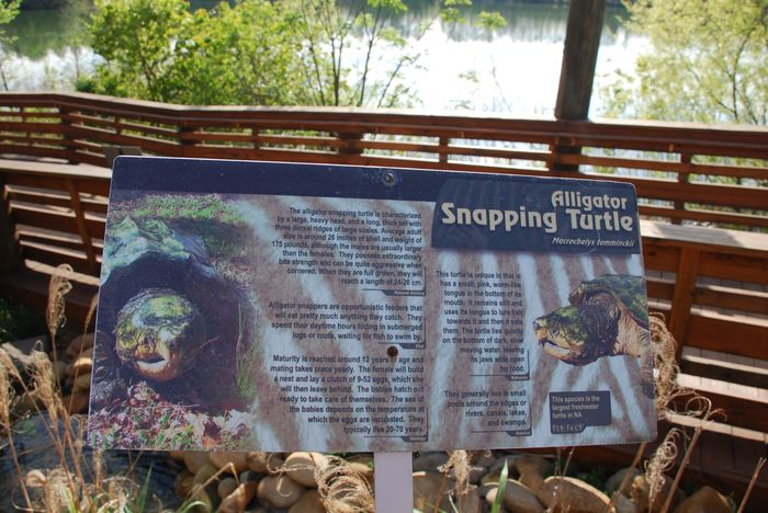 Montgomery Z00, Montgomery, Alabama- snapping turtle display