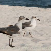 Audubon-Bird-Sanctuary-Dauphin-Island