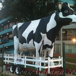 Largest-Cow-in-Alabama-State-Farmers-Market-Montgomery-Alabama